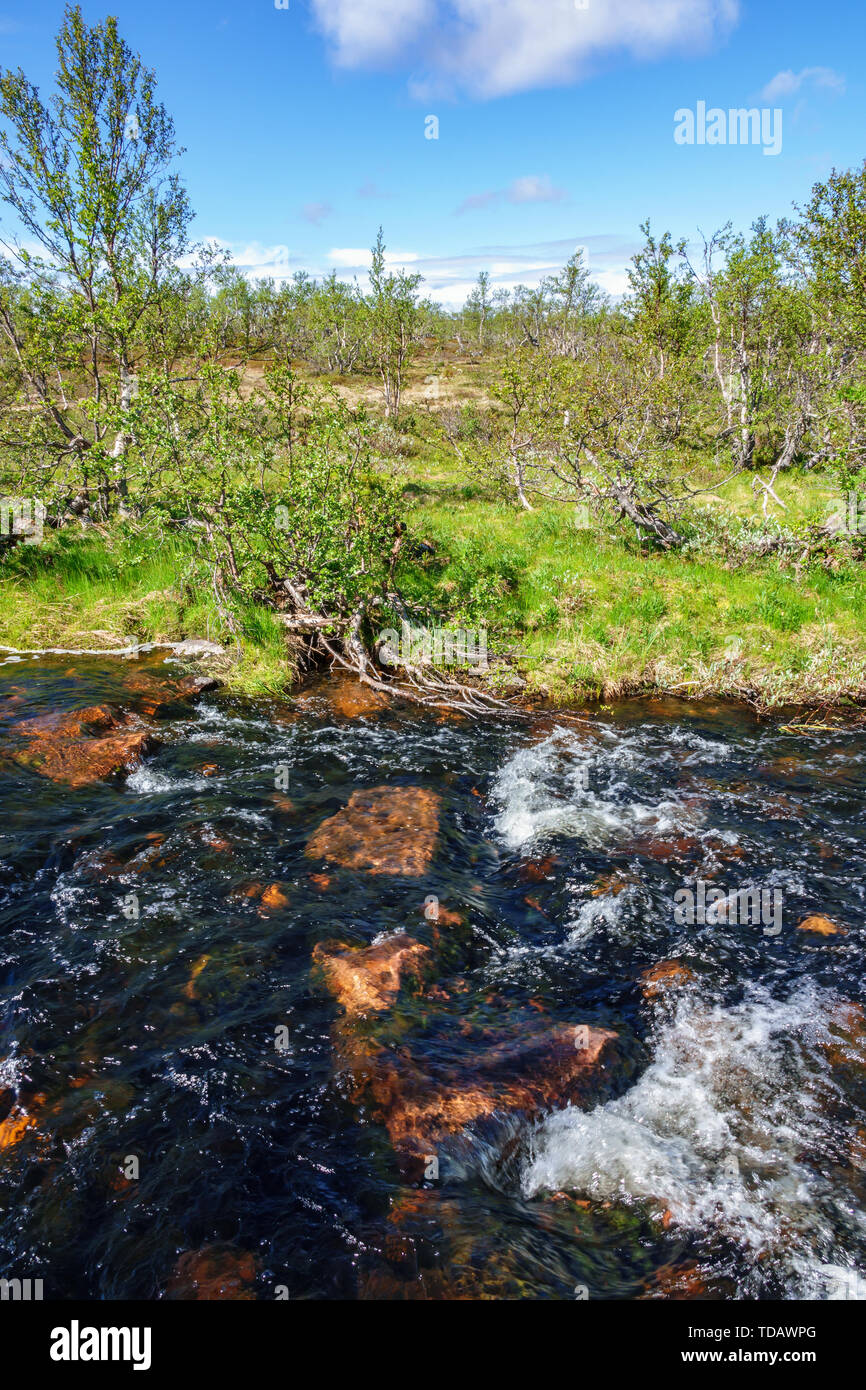 Stream with running water in a high country forest landscape - Stock Image