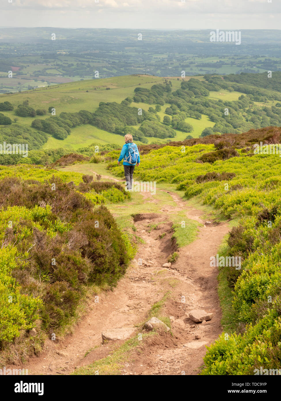 A woman walking in the hills near Abergavenny and Sugar Loaf Mountain in the brecon Beacons Wales UK - Stock Image