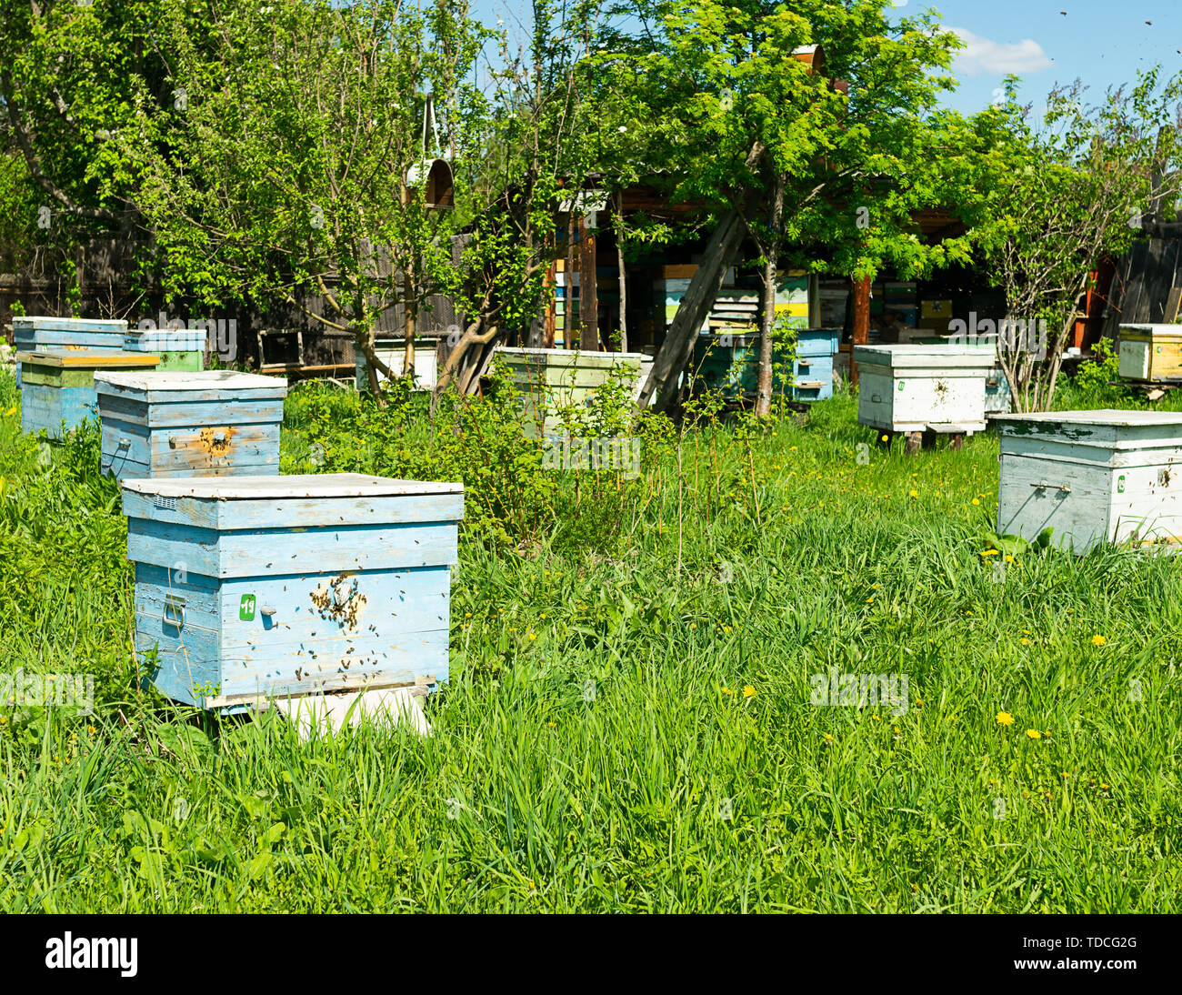 Bees fly into a wooden colored beehive. Beekeeping work on the apiary. Selective focus. - Stock Image