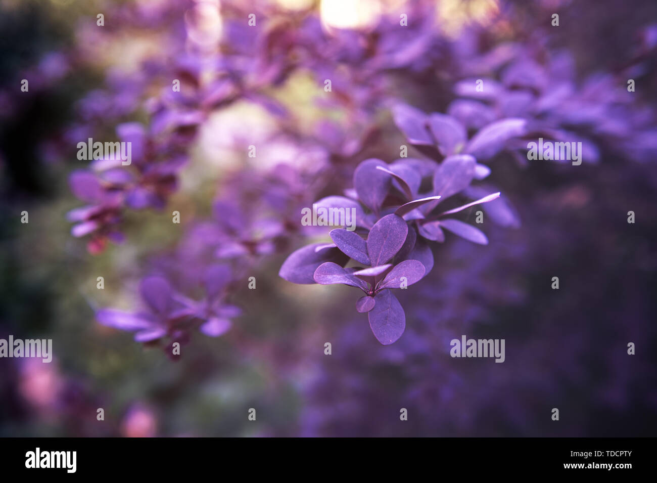 Creative layout made of green leaves. Flat lay. Nature background Stock Photo