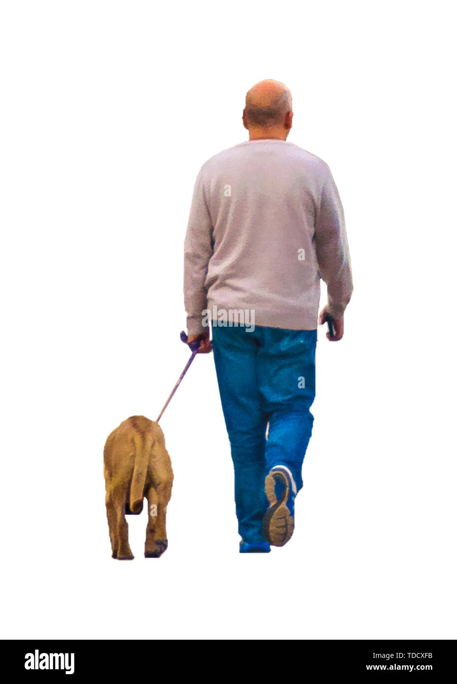 Isolated photo back view adult bald man walking his dog - Stock Image