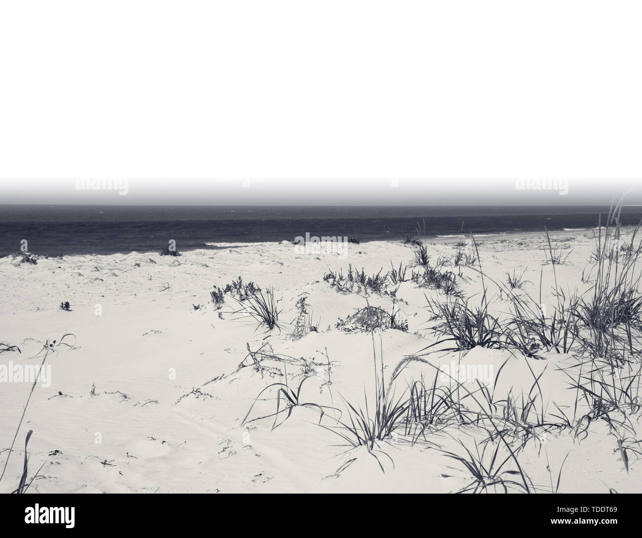 Sea and sand on deserted beach at hot summer day black and white retro toned landscape with copy space