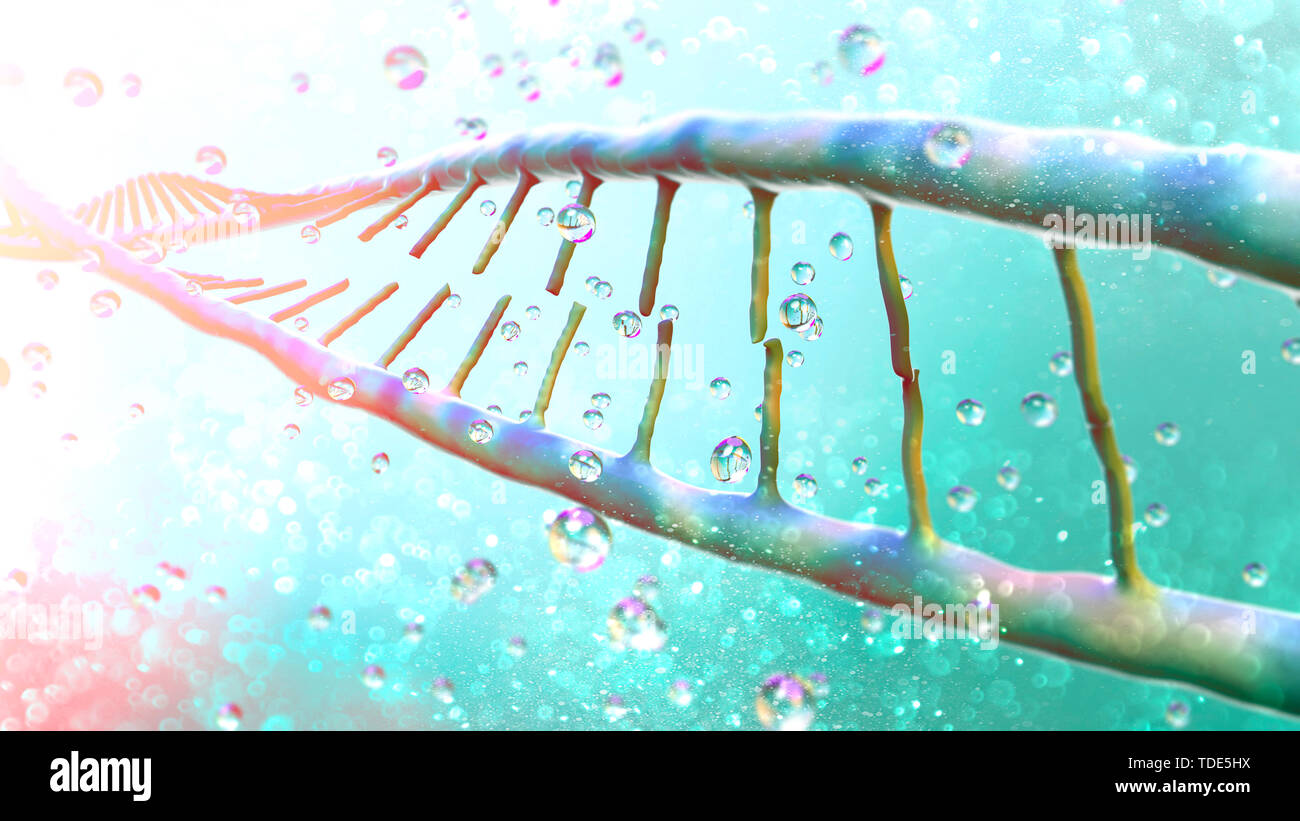 DNA, Deoxyribonucleic acid is a thread-like chain of nucleotides carrying the genetic instructions used in the growth, development. Dna helix - Stock Image