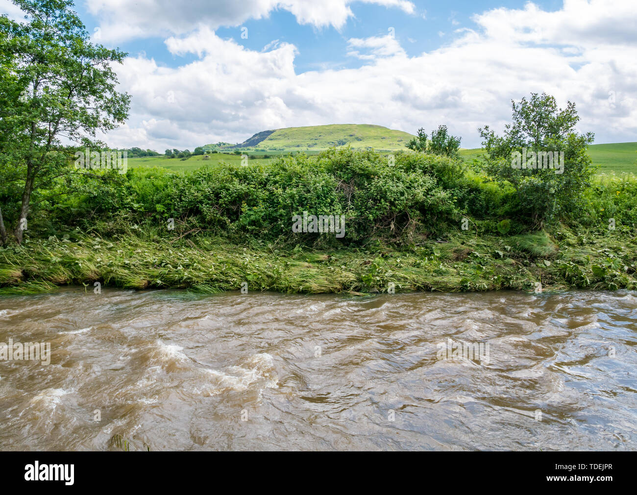 River Tyne path, East Lothian, Scotland, United Kingdom, 15th June 2019. UK Weather: Tyne River path with evidence of flood damage after heavy rain and a swollen river with crushed vegetation along the riverbank with a view of the crag and tail of Traprain Law - Stock Image
