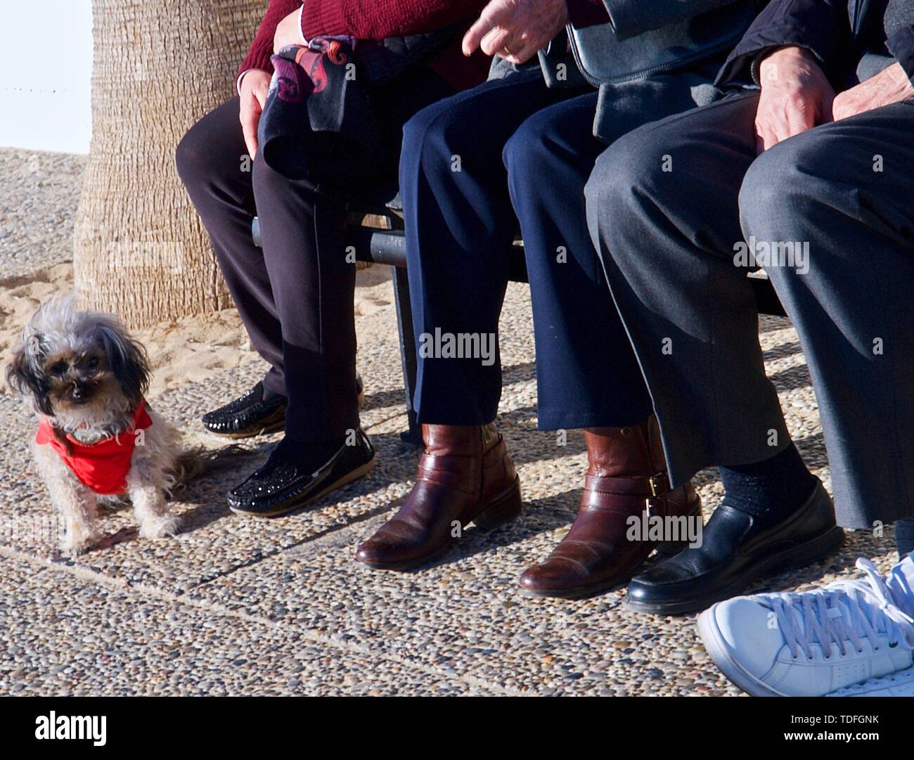 Awesome Older People Are Sitting On A Bench With A Small Dog Stock Frankydiablos Diy Chair Ideas Frankydiabloscom