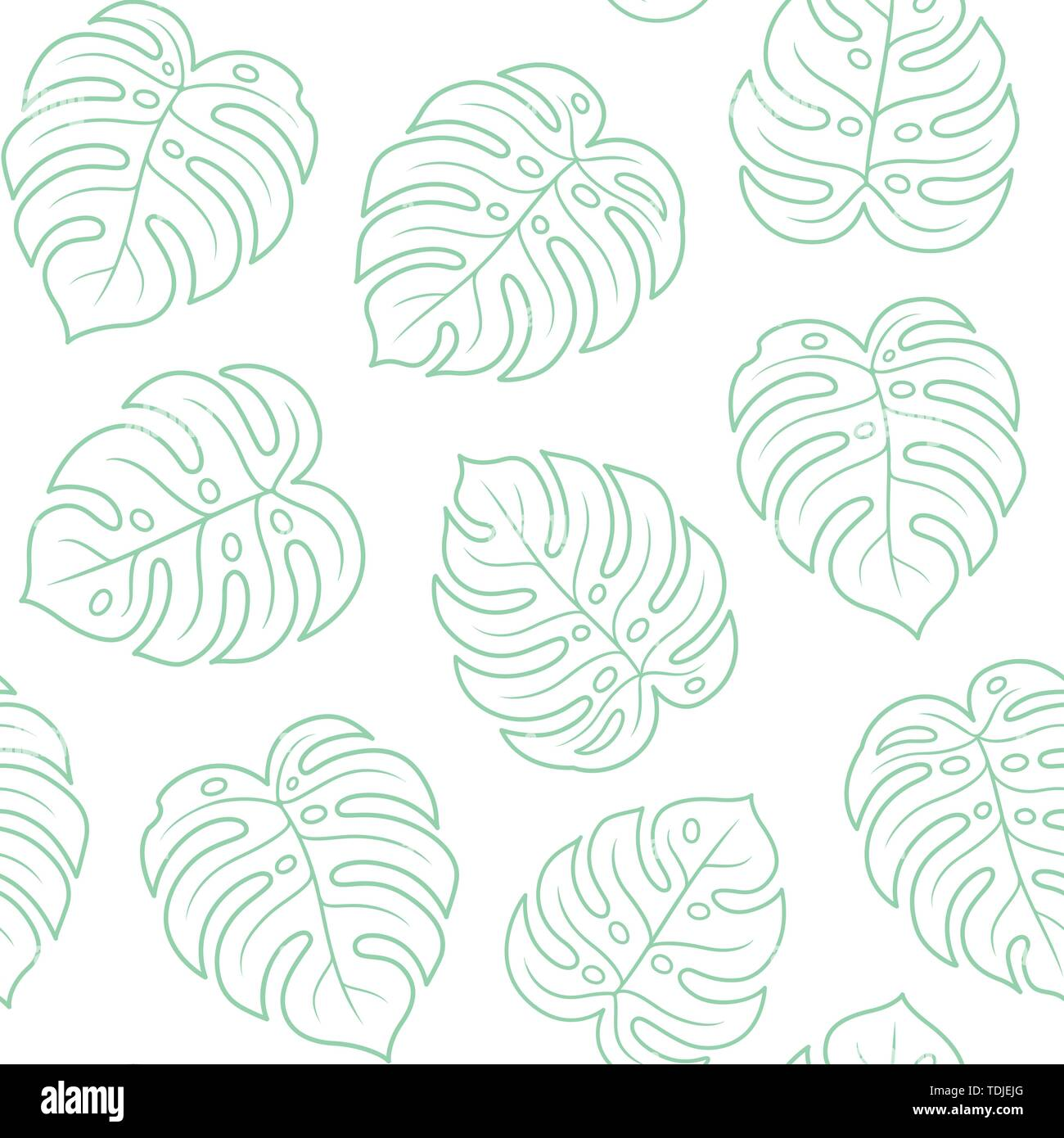 Monstera Leaf Seamless Pattern Light Green Outline On White Background Simple Hand Drawn Exotic Plant Leaves Tropical Summer Texture Vector Illustr Stock Vector Image Art Alamy You can also click related recommendations to view more background images in our huge database. https www alamy com monstera leaf seamless pattern light green outline on white background simple hand drawn exotic plant leaves tropical summer texture vector illustr image249342312 html
