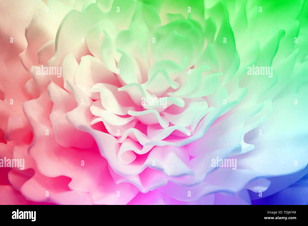 Beautiful multicolor flower made of synthetic material . Blurred background - Stock Image