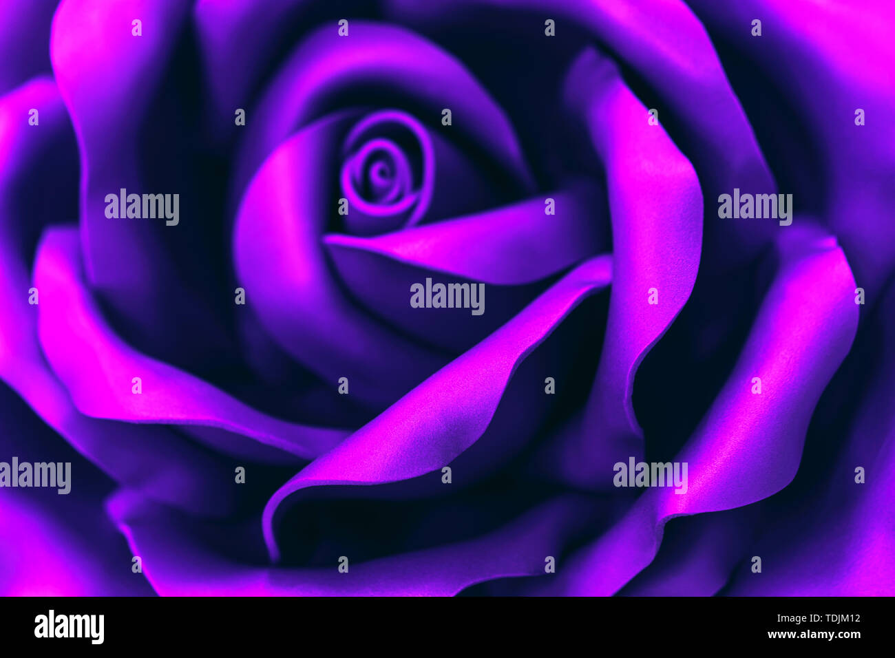 Beautiful ultraviolet flower made of synthetic material . Abstract backgroun - Stock Image