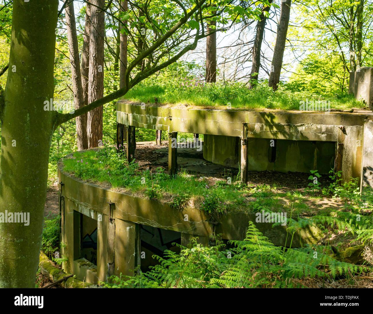 Derelict world war II gun emplacement hidden in woodland, Hound Point, Dalmeny Estate, Scotland, UK - Stock Image