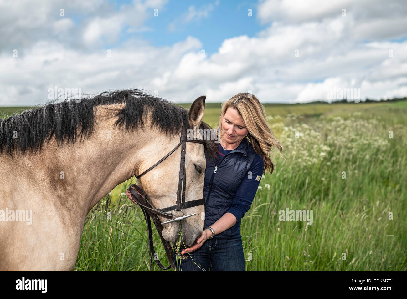 Oxton, Lauder, Scottish Borders, UK. 17th June 2019. Lesley McCrindle prepares to show her Connemara Ponies at the Royal Highland Show in Edinburgh this week. The breed are known for their versatility and endurance, orginating of course from Ireland. Credit: Chris Strickland / Alamy Live News - Stock Image