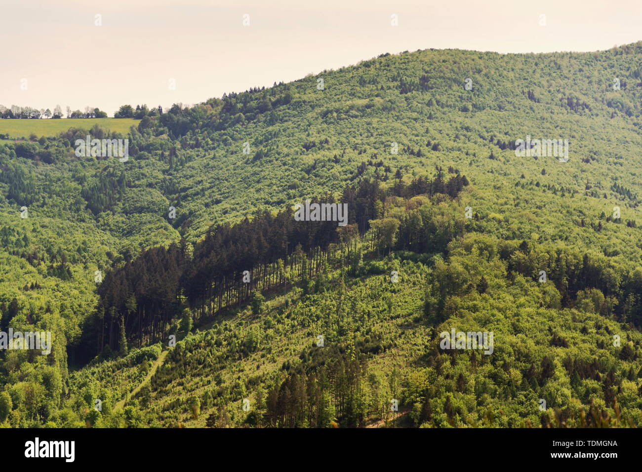 Beautiful summer landscape with colorful mixed forest around Zitkova village, White Carpathians, wood diversity, water retention concept, Czech Republ - Stock Image