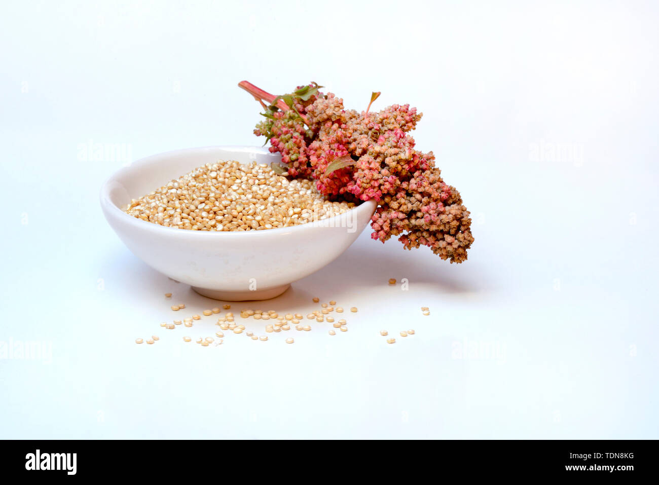 Quinoa in Schale und reifer Quinoa-Zweig, Chenopodium quinoa Stock Photo