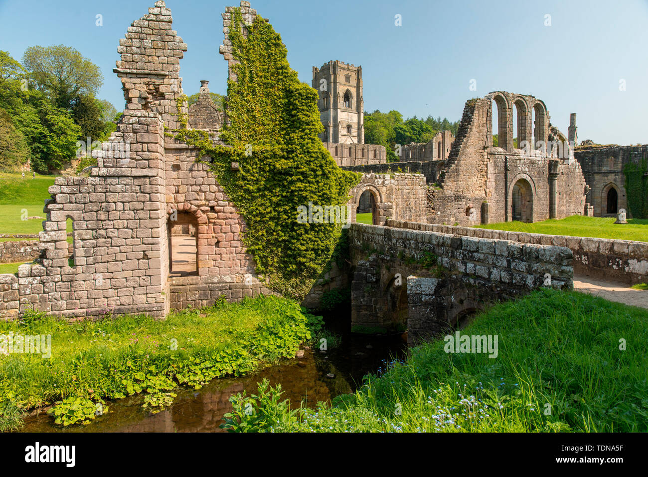 Fountains Abbey, Yorkshire Dales NP, Yorkshire, UK Stock Photo