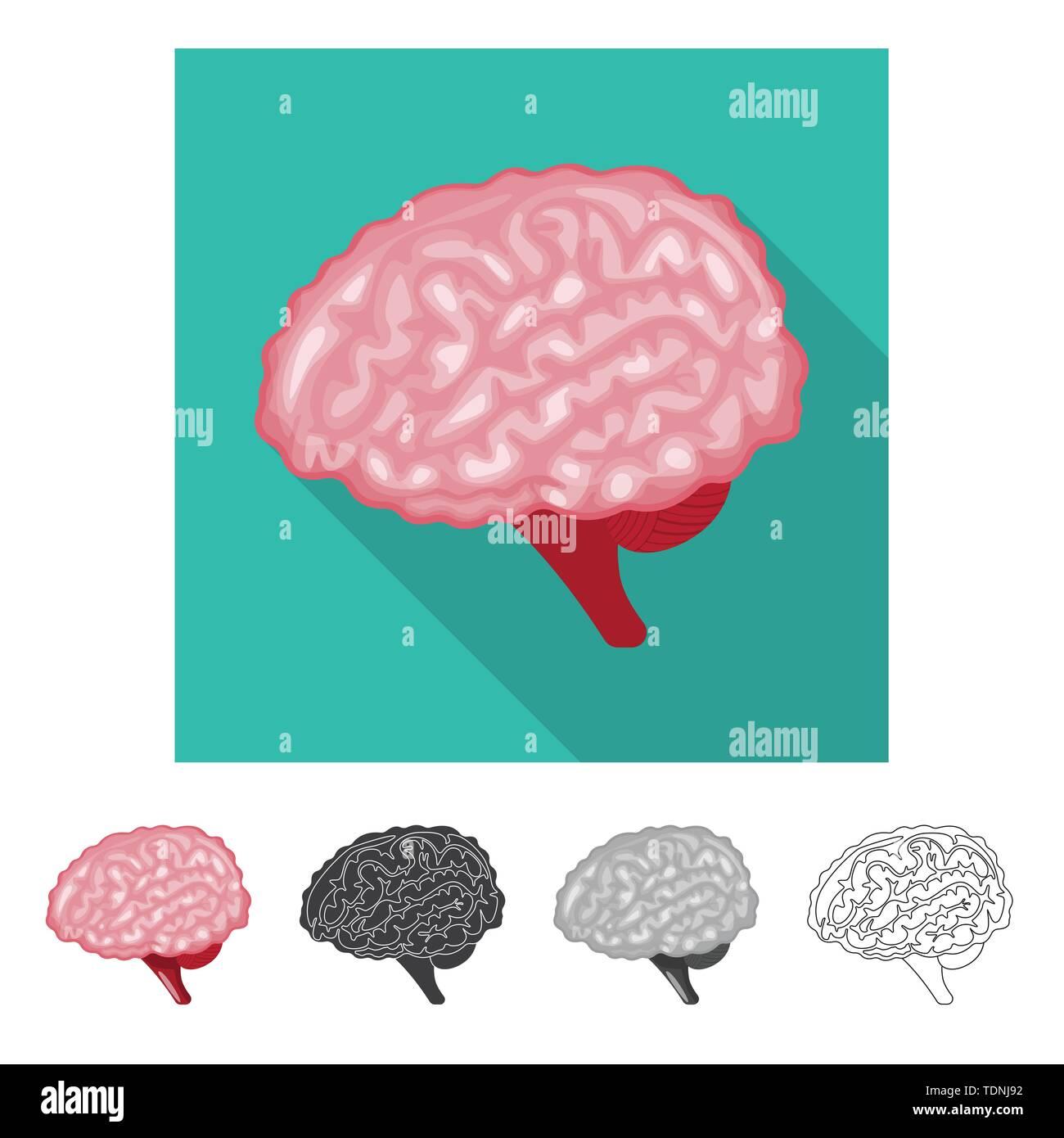 Brain Mind Intelligence Science Psychology Genius