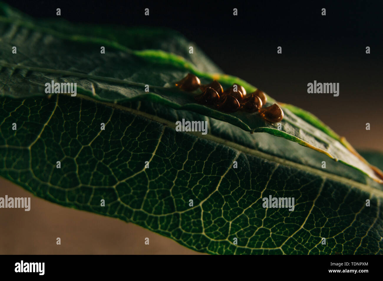 Insect Eggs Stock Photos & Insect Eggs Stock Images - Alamy