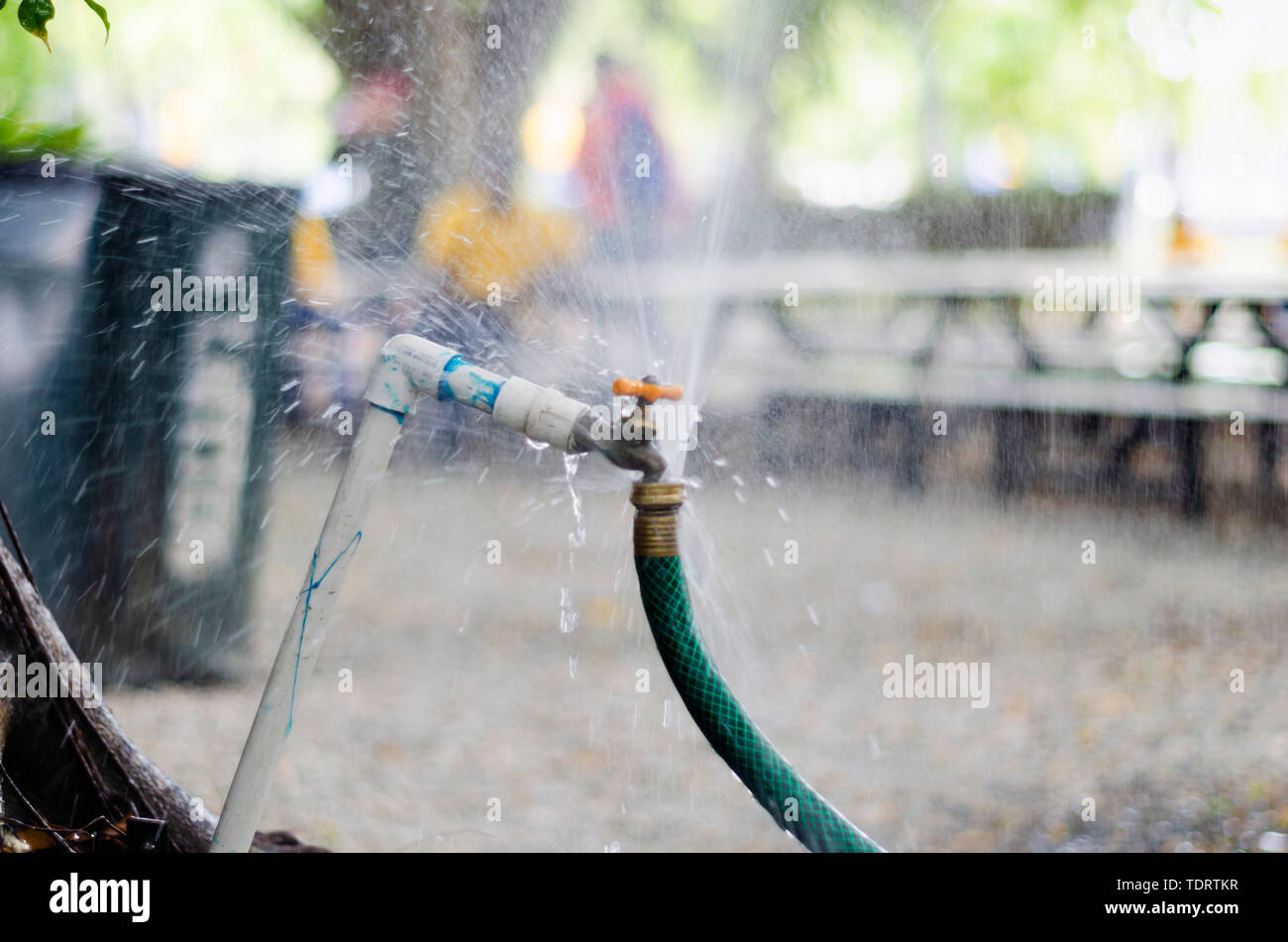 garden faucet wasting water by cooling the yard connected with a green irrigation hose - Stock Image