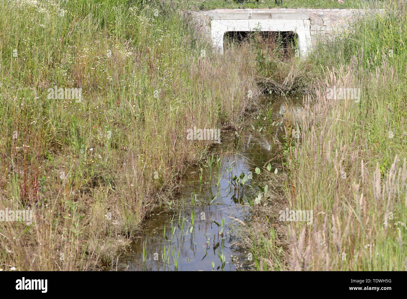 Rostock, Germany. 18th June, 2019. The developed watercourse 2/8 in the district Evershagen, inlet to the Schmarler Bach. After the redesign of the watercourse, the Evershagen district is largely protected from flooding. At a press event on watercourse 2/8, the Hanseatic city's drainage concept for heavy rainfall is presented. After the heavy rain of 2011, a drainage plan for Rostock has been drawn up in recent years, according to which the 50 main flow paths and 150 secondary flow paths will be extended. Credit: Bernd Wüstneck/dpa-Zentralbild/ZB/dpa/Alamy Live News Stock Photo