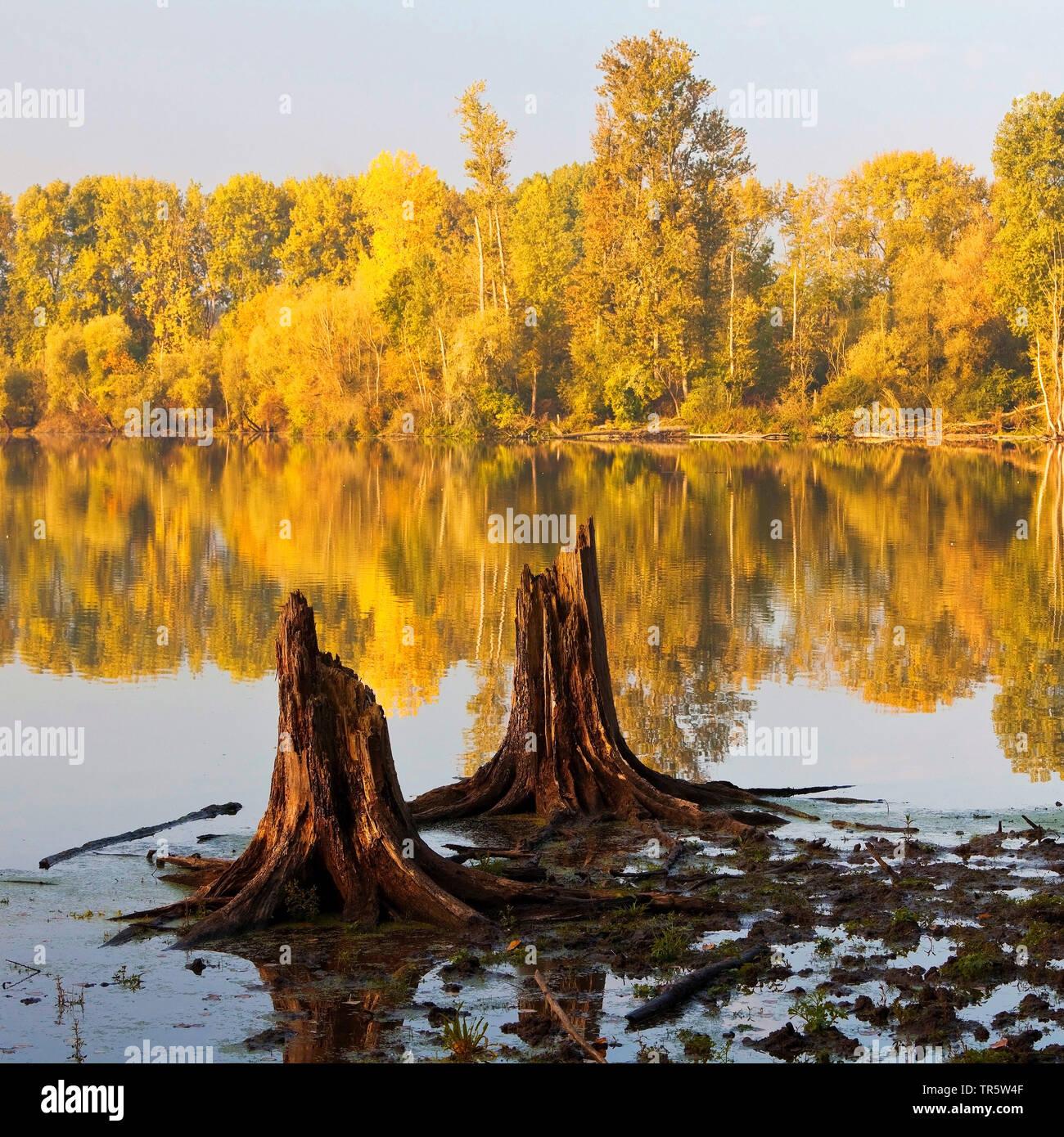 tree stumps in wetlands Bislicher Insel, Germany, North Rhine-Westphalia, Lower Rhine, Xanten Stock Photo