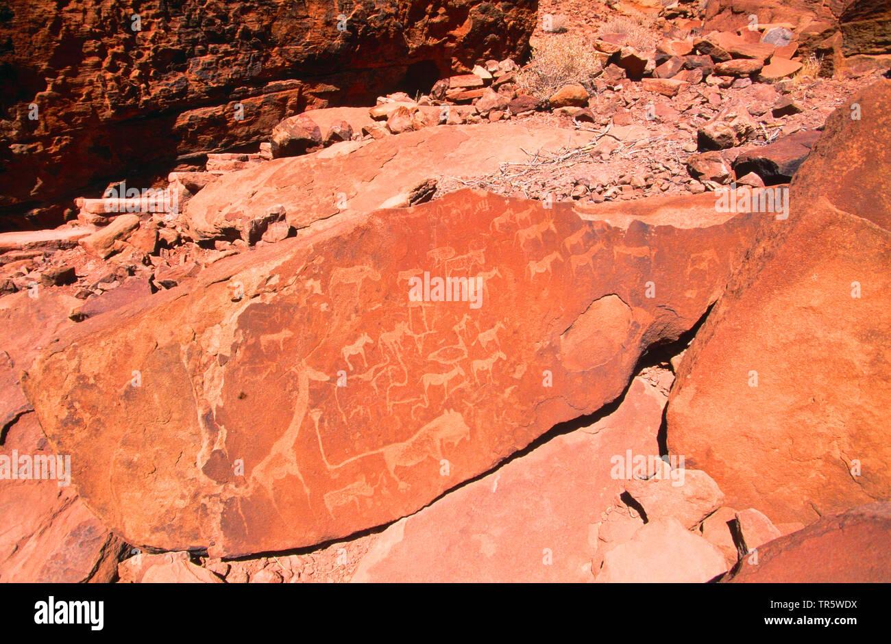 Felsbilder von Twyfelfontein, Namibia, Damaraland, Twyfelfontein | ancient rock engravings of Twyfelfontein, Namibia, Damaraland, Twyfelfontein | BLWS - Stock Image