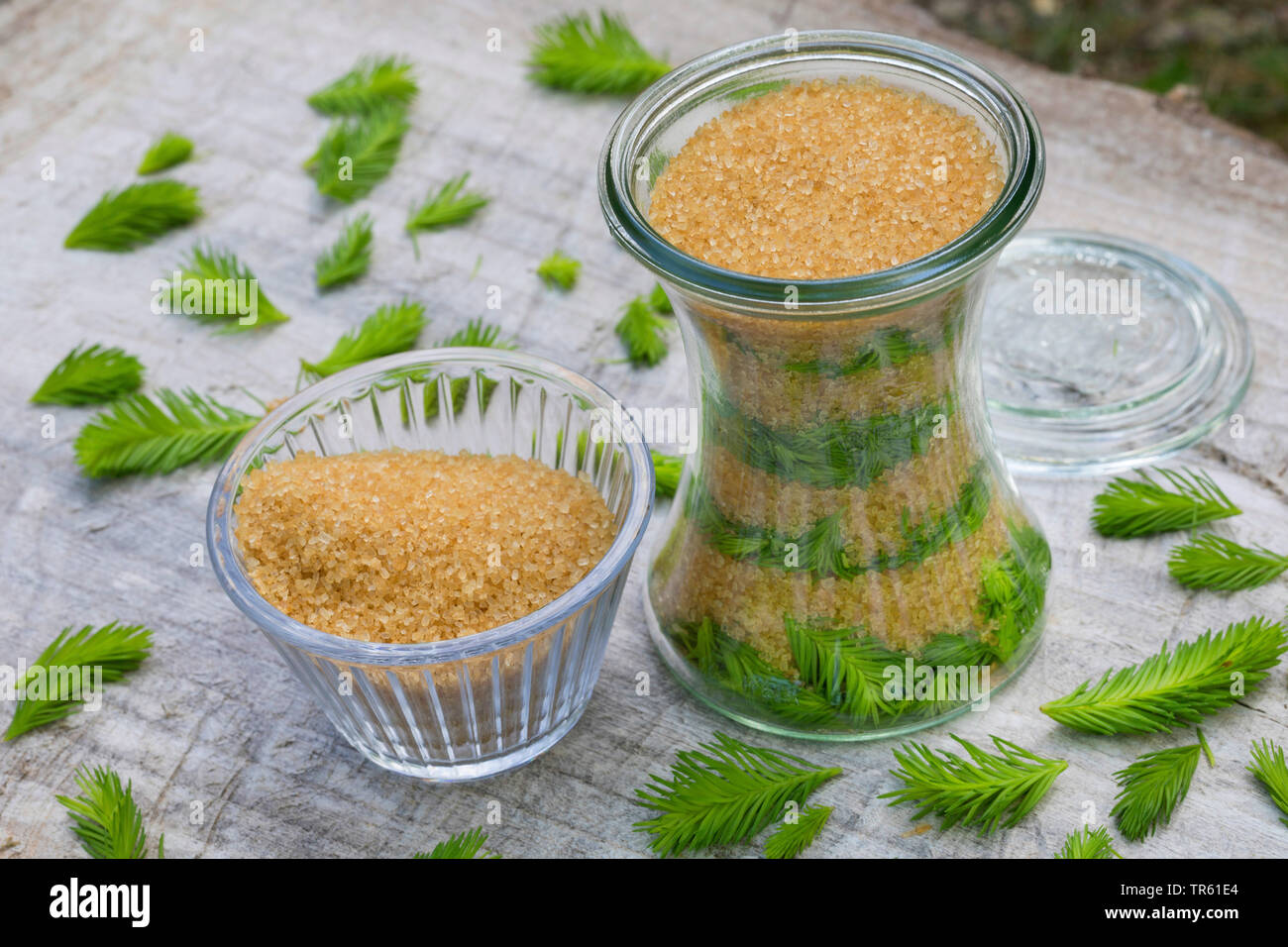 Norway spruce (Picea abies), Maiwipferl-Sirup, selfmade cough syrup from spruce sprouts, Germany - Stock Image