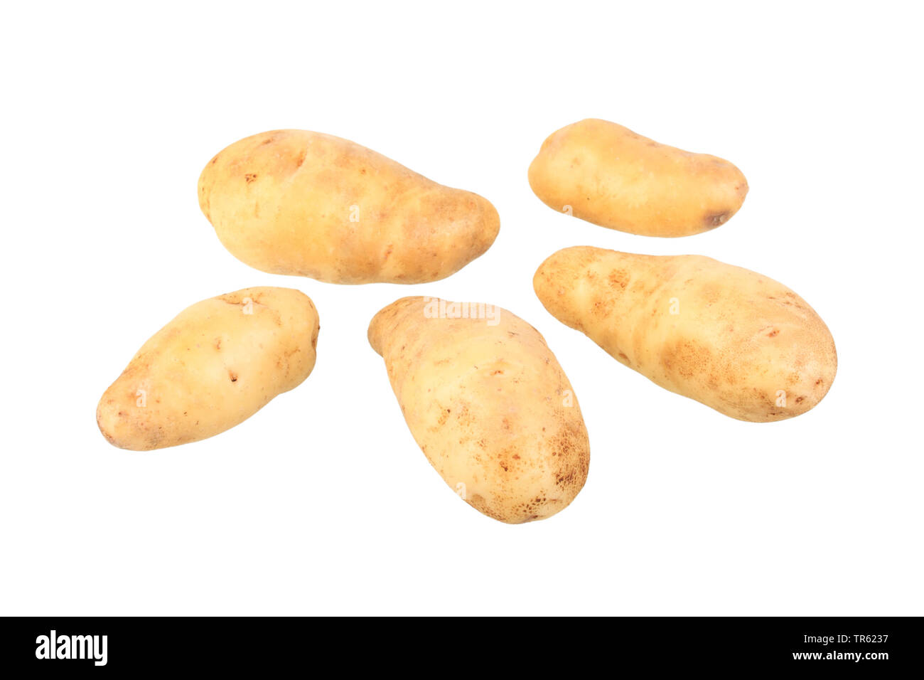 potato (Solanum tuberosum La Ratte d'Ardeche), potatoes of cultivar La Ratte d'Ardeche, cutout Stock Photo