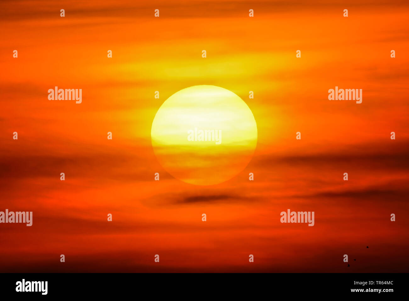 untergehende Sonne in Hamburg, Deutschland, Hamburg   sunset in Hamburg, Germany, Hamburg   BLWS473496.jpg [ (c) blickwinkel/McPHOTO/C. Ohde Tel. +49 - Stock Image