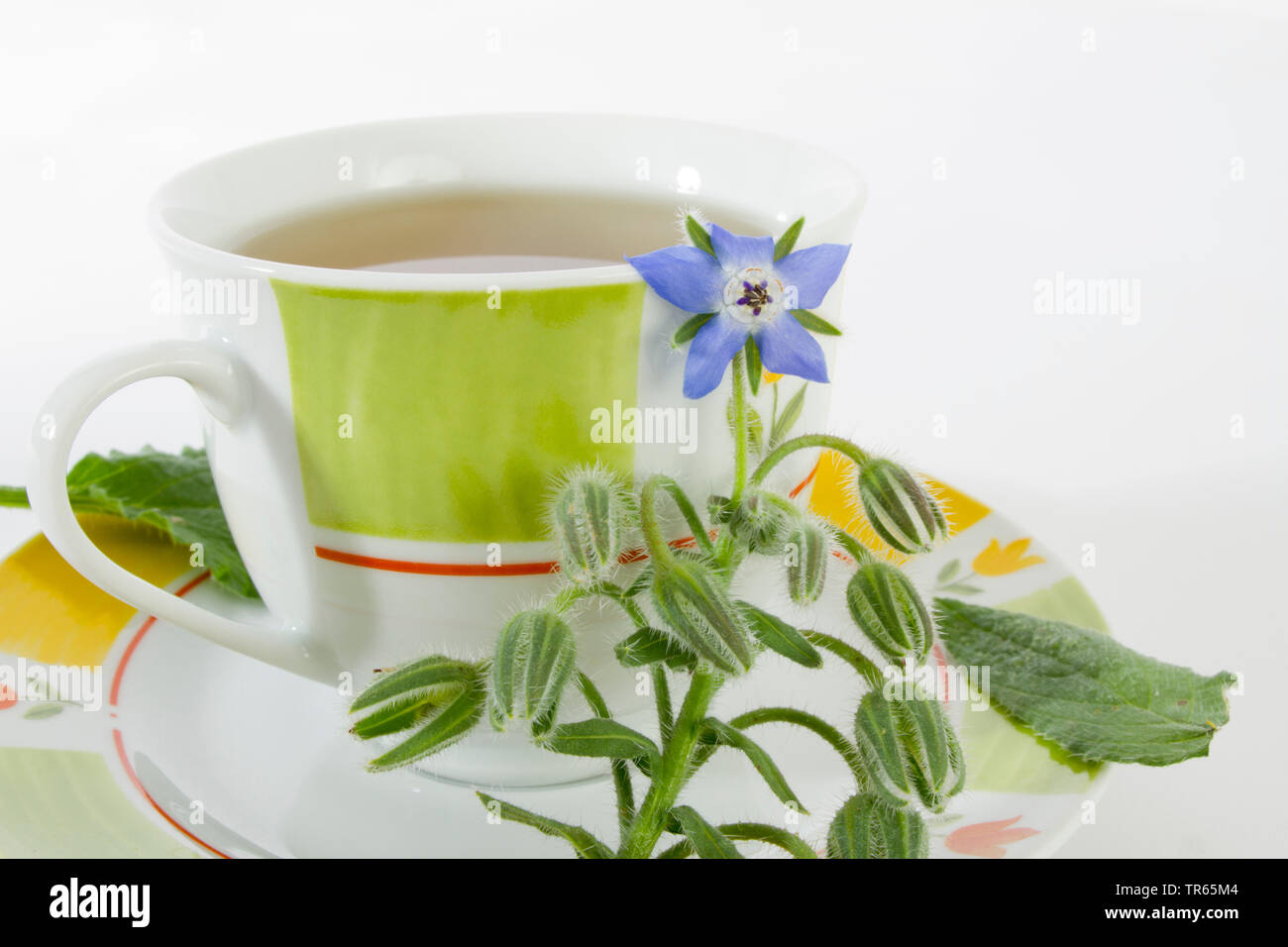Borretsch, Boretsch, Gurkenkraut (Borago officinalis), Borretschtee mit Borretschpflanze, Deutschland | common borage (Borago officinalis), borage tea - Stock Image