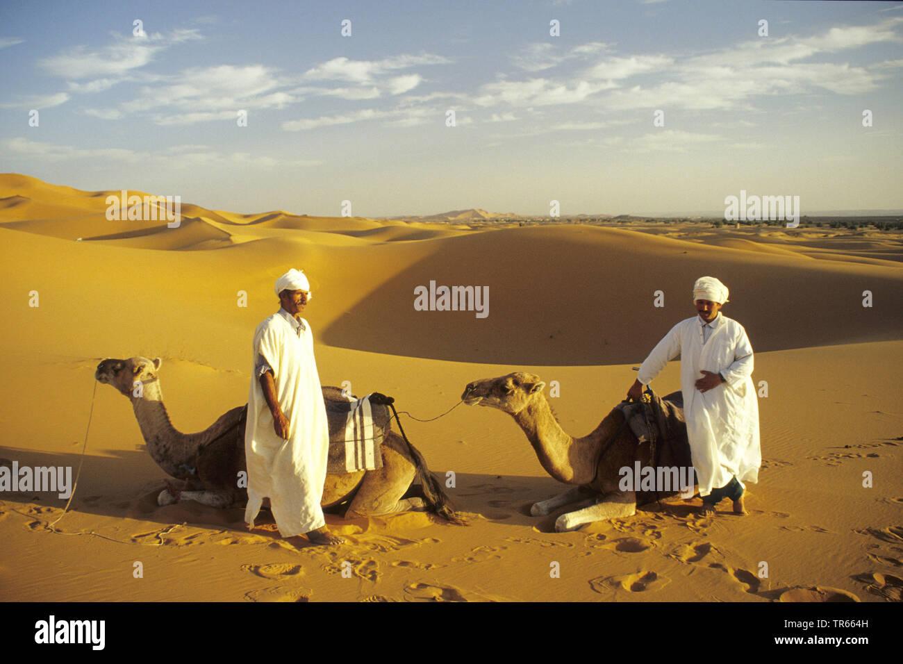 Dromedar, Einhoeckriges Kamel (Camelus dromedarius), Kameltreiber auf Sandduenen im Ziz-Tal, Marokko, Marokko, Erg Chebbi, Ziz-Tal | dromedary, one-hu - Stock Image