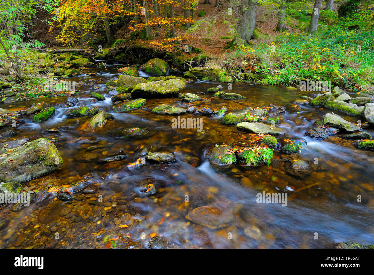 Steinklamm gorge with Grosse Ohe river in autumn, Germany, Bavaria, Bavarian Forest National Park, Spiegelau - Stock Image