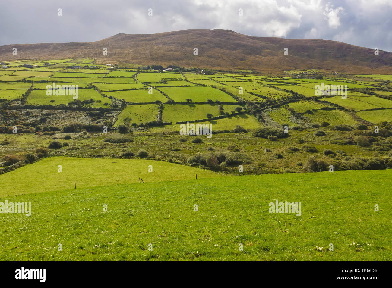 Dingle peninsula, Ireland, Ring of Kerry, Dingle Peninsula - Stock Image