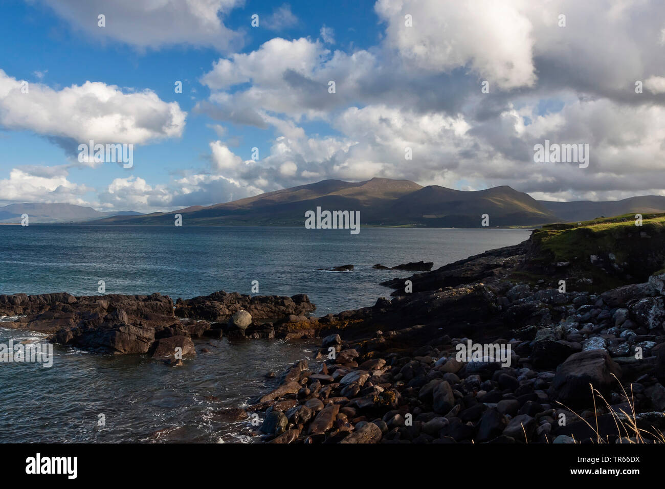 Felskueste der Dingle-Halbinsel, Irland, County Kerry, Dingle-Halbinsel, Dingle |  , rocky coast of Dingle peninsula, Ring of Kerry, Ireland, County K - Stock Image