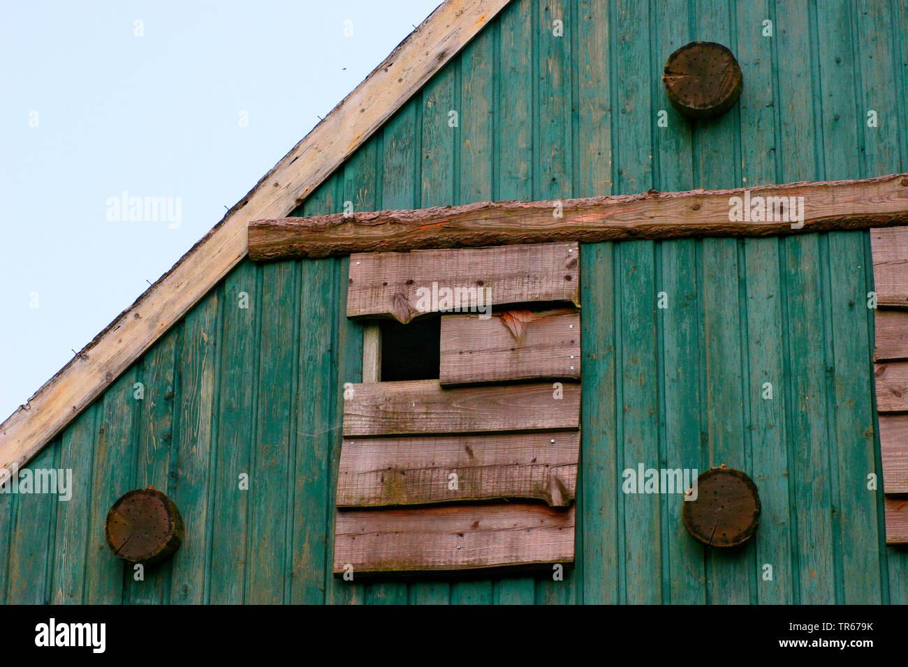 Schleiereule, Schleier-Eule (Tyto alba), Uhlenflucht an einem Scheunengiebel, Einflugoeffnung fuer Schleiereule, Deutschland | Barn owl (Tyto alba), e - Stock Image