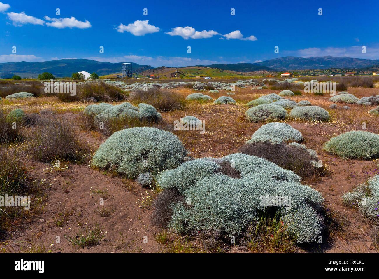 Pflanzen in der Bucht von Kaloni, Mytilini, Griechenland, Lesbos, Aegaeis   plants near beach, Bay of Kaloni, Mytilini, Greece, Lesbos, Aegean Sea   B - Stock Image