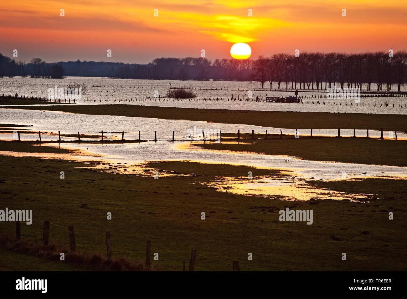 Bislicher Insel bei Hochwasser, Auenlandschaft bei Sonnenuntergang, Deutschland, Nordrhein-Westfalen, Ruhrgebiet, Wesel | nature conservation area Bis - Stock Image