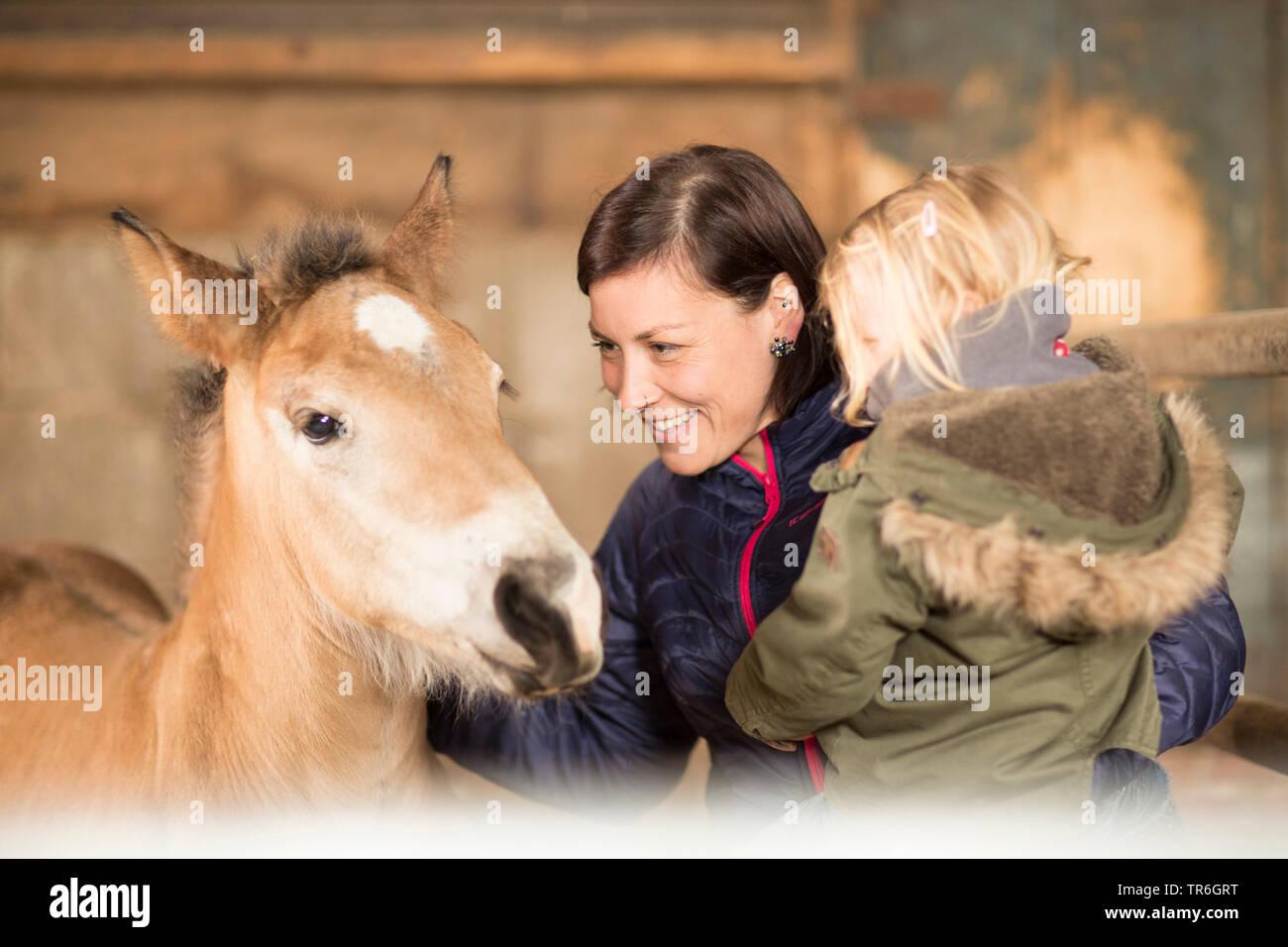Pferd (Equus przewalskii f. caballus), Mutter mit kleinem Maedchen auf dem Arm besucht ein Fohlen im Stall, Deutschland   domestic horse (Equus przewa - Stock Image
