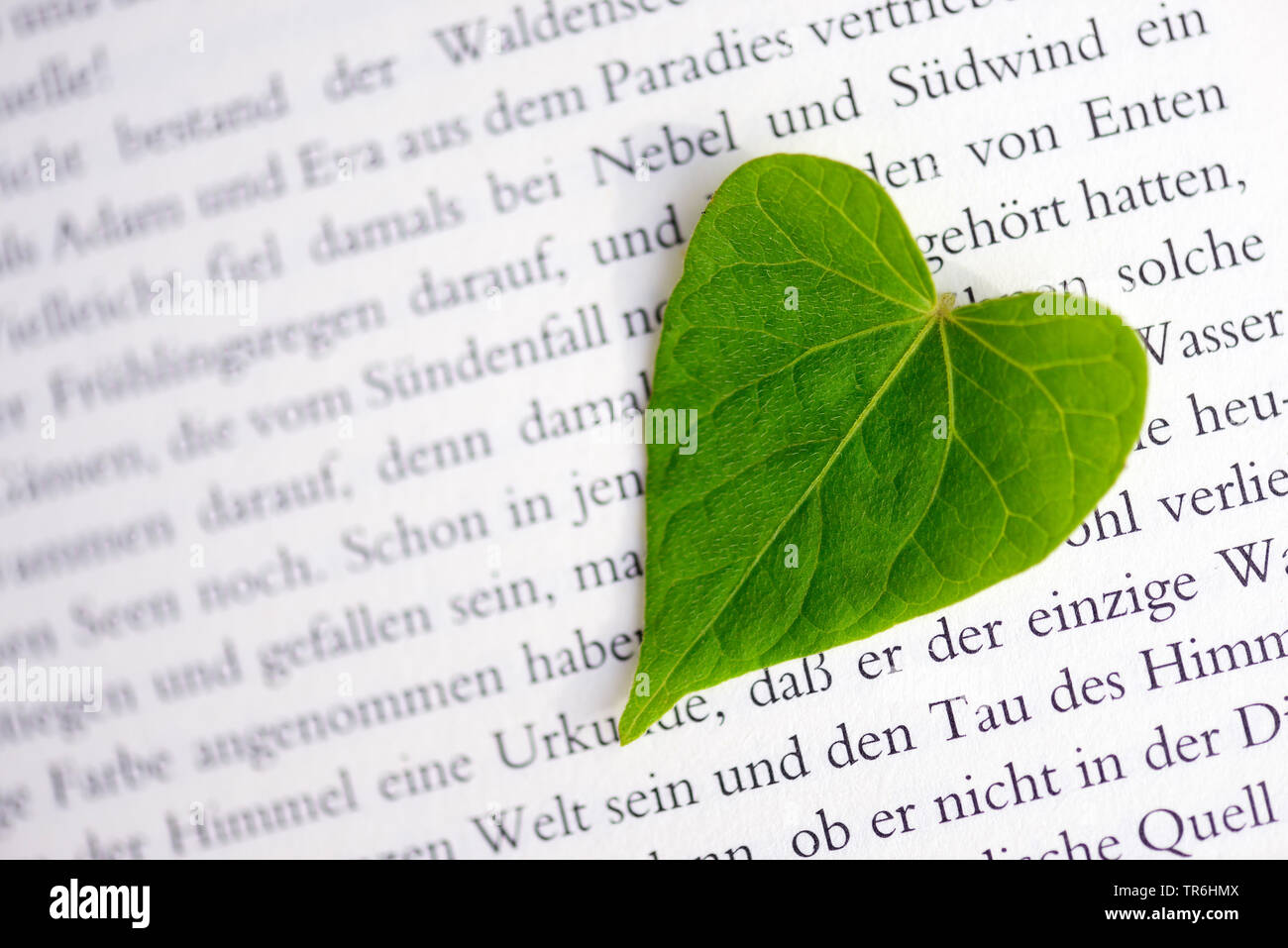 heart-shaped leaf on a bookpage, romance, Germany Stock Photo