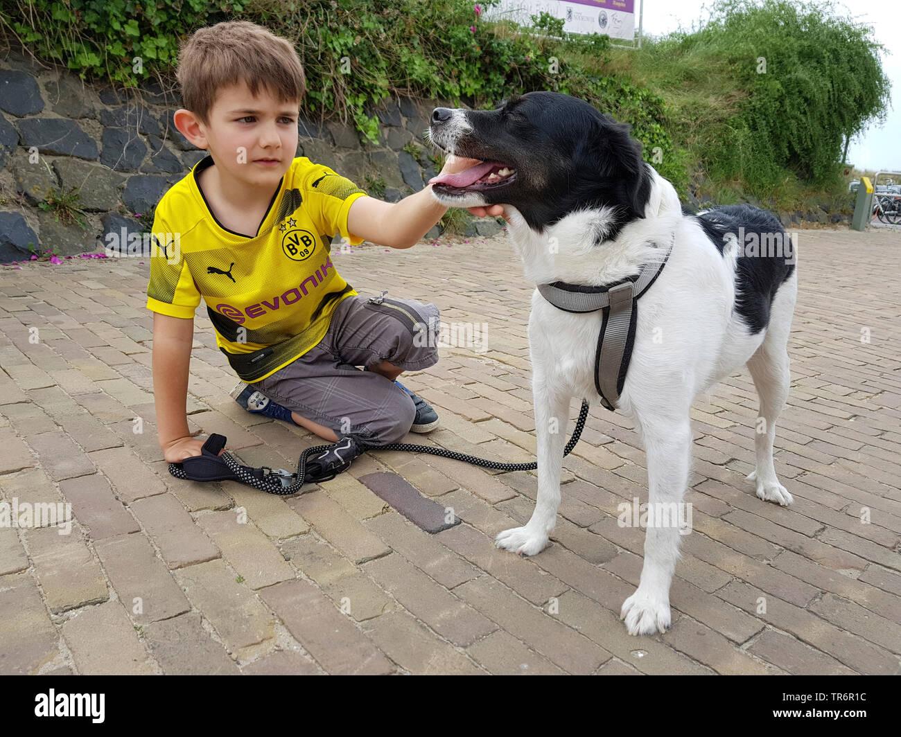Mischlingshund (Canis lupus f. familiaris), kleiner Junge kniet auf dem Boden und streichelt einen Mischlingshund, Deutschland | mixed breed dog (Cani - Stock Image