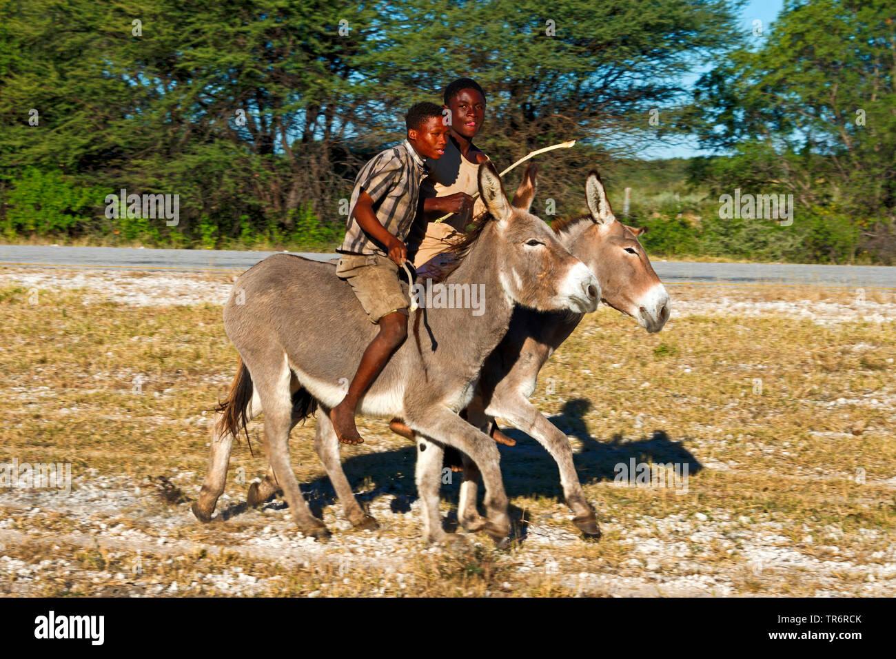 Domestic donkey (Equus asinus asinus), two boy riding on donkeys, Namibia, Rundu Stock Photo