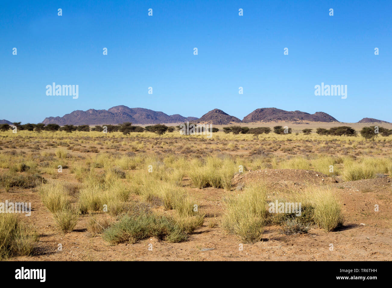 Oued Jenna, Morocco, Western Sahara, Aousserd area, Oued Jenna - Stock Image