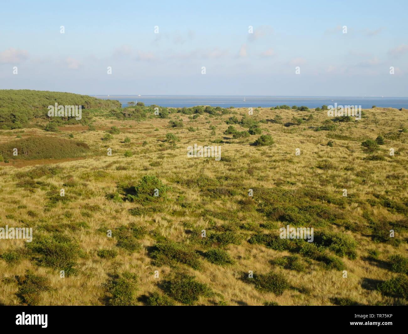 Duenen auf Vlieland, Niederlande, Friesland, Vlieland | dunes with scrubs, Netherlands, Frisia, Vlieland | BLWS498505.jpg [ (c) blickwinkel/AGAMI/M. G - Stock Image