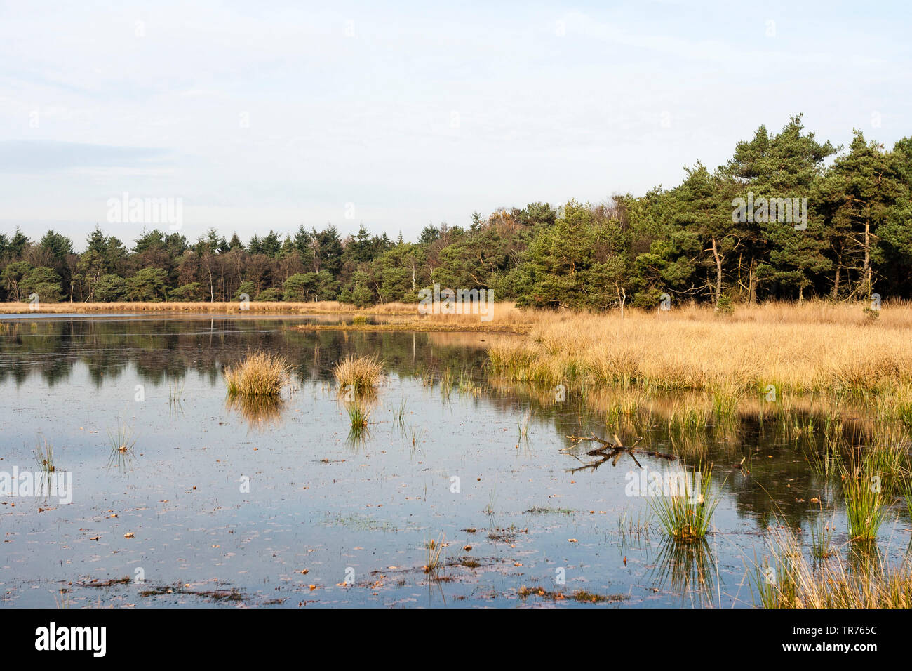 lake at Het Gooi in autumn, Netherlands, Northern Netherlands, Het Gooi Stock Photo