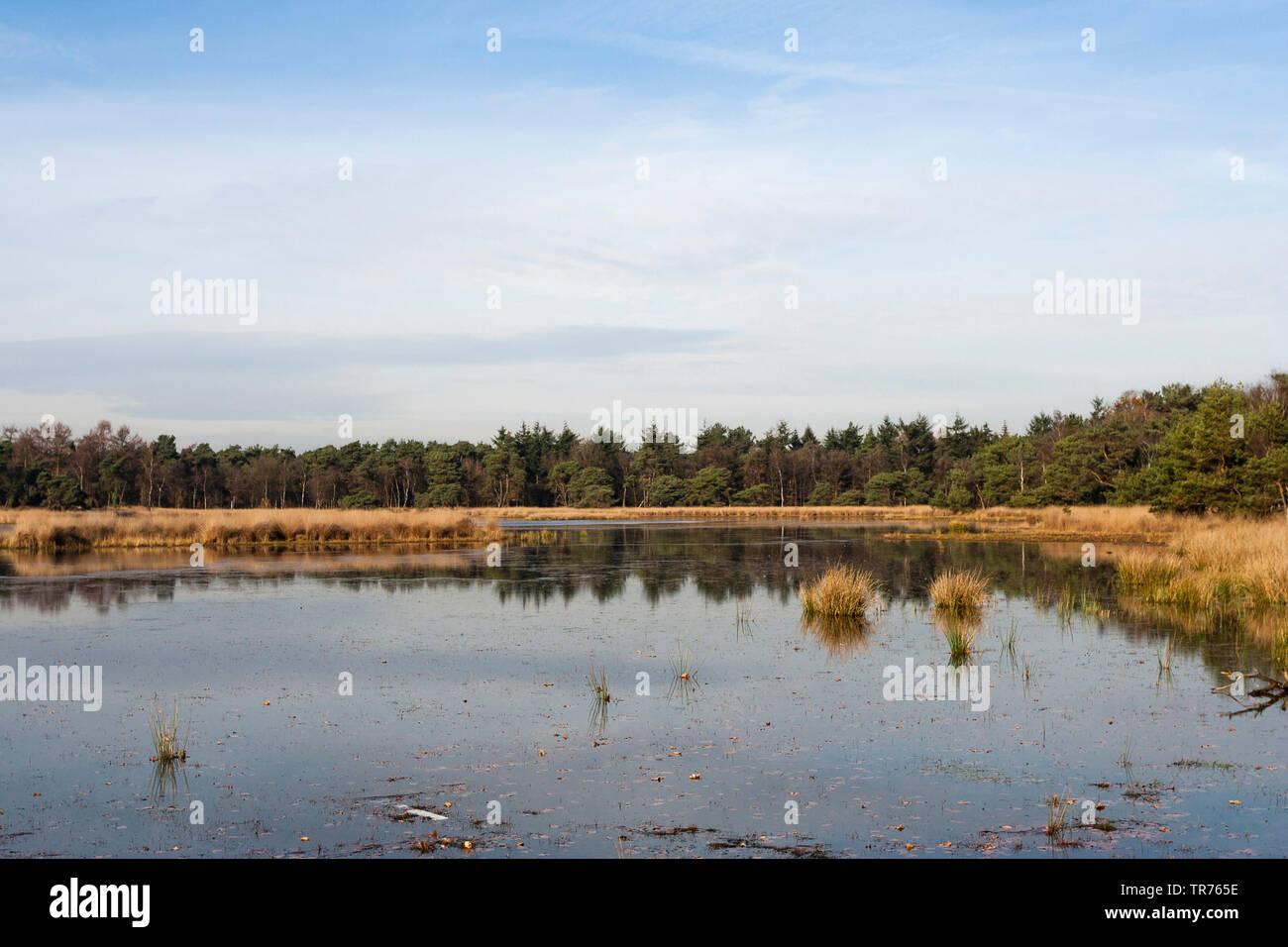 lake at Het Gooi in autumn, Netherlands, Northern Netherlands, Het Gooi Stock Photo
