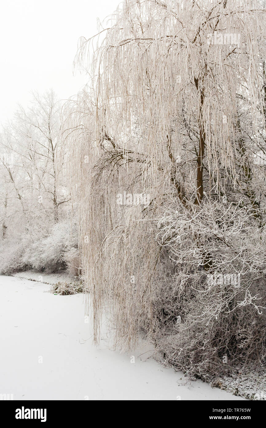 Baeume mit Raureif an einem Teich, Niederlande, Suedholland, Katwijk   Trees covered in frost standing at waterside of frozen ditch at Katwijk, Nether - Stock Image