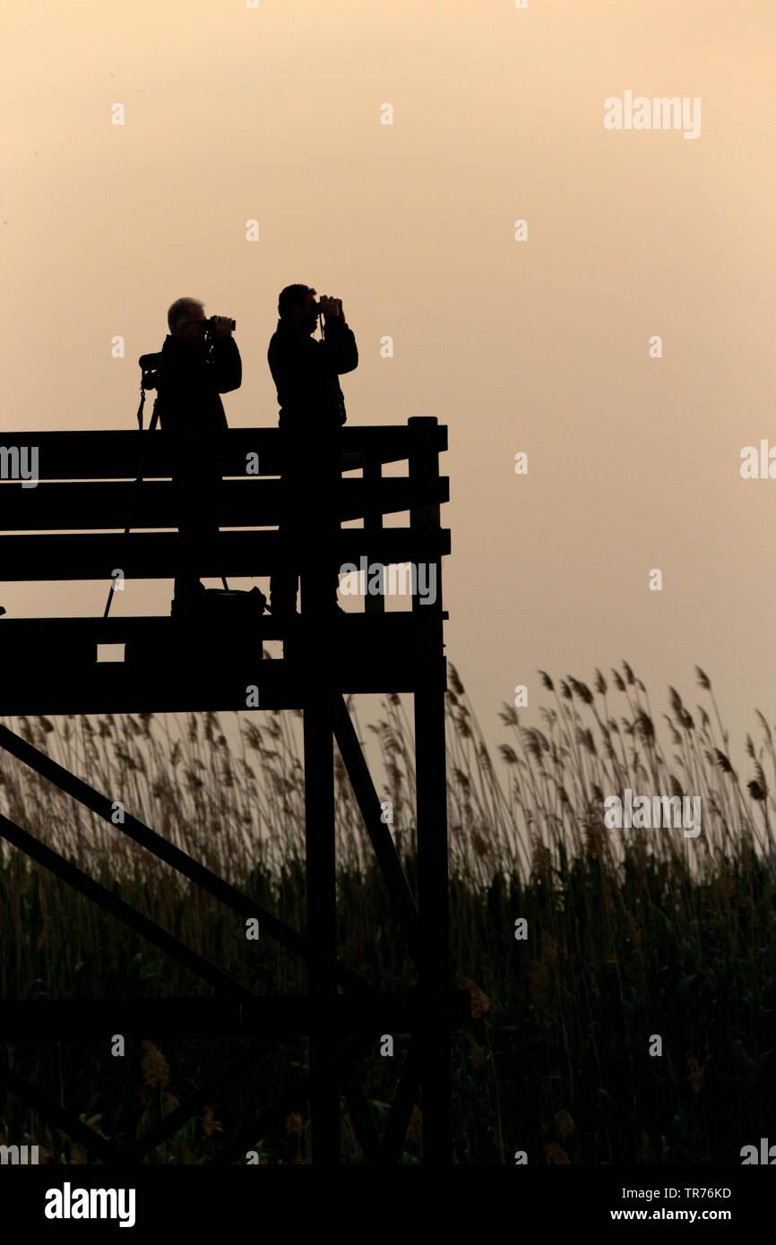Ornithologen bei der Vogelbeobchatung in einem Schilfroehricht am Abend, Spanien, Balearen, Mallorca, MR=Yes | Birdwatchers walking in nature reserve - Stock Image