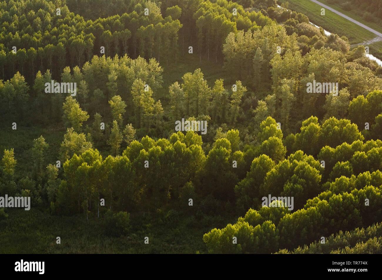 Laubwald im Abendlicht, Luftbild, Niederlande, Nordholland | forest in evening light, aerial view, Netherlands, Northern Netherlands | BLWS500064.jpg - Stock Image