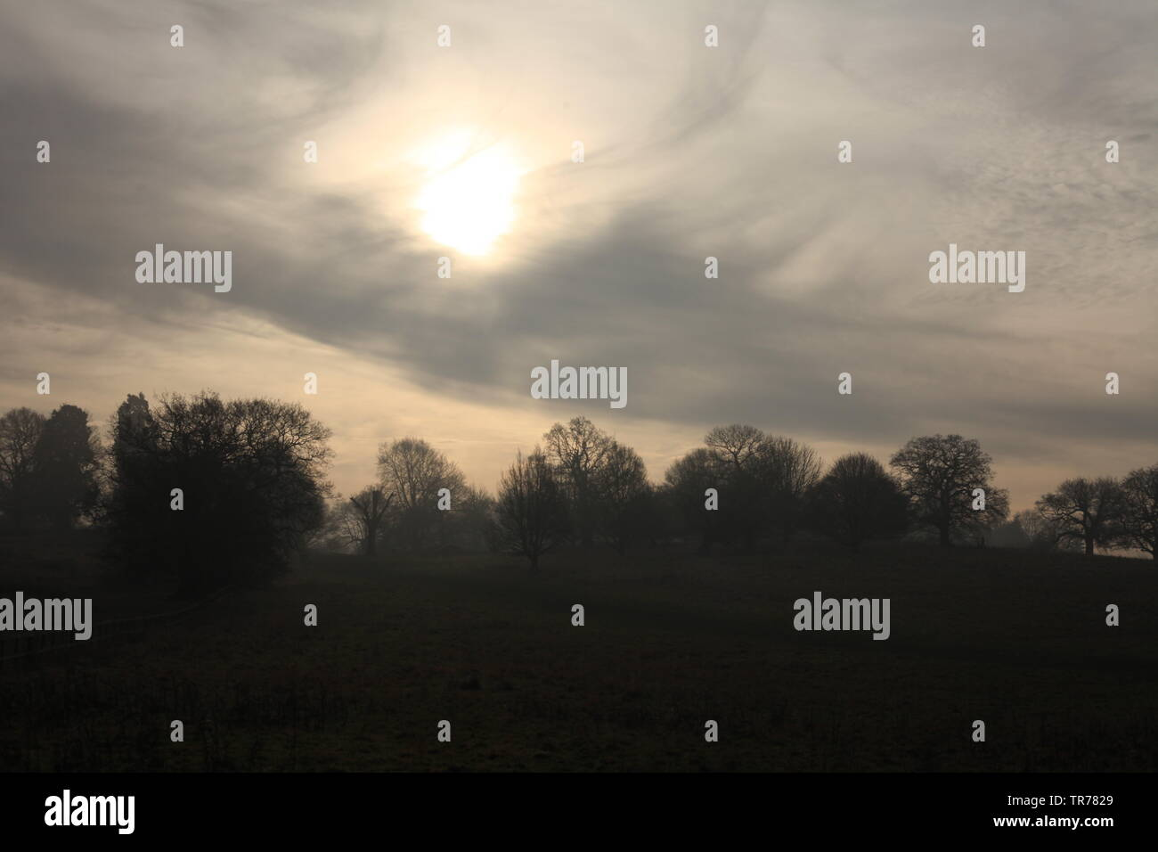 Essex Travel News & Weather - Turbulent cloud cover over woodland, Essex, Britain. Stock Photo