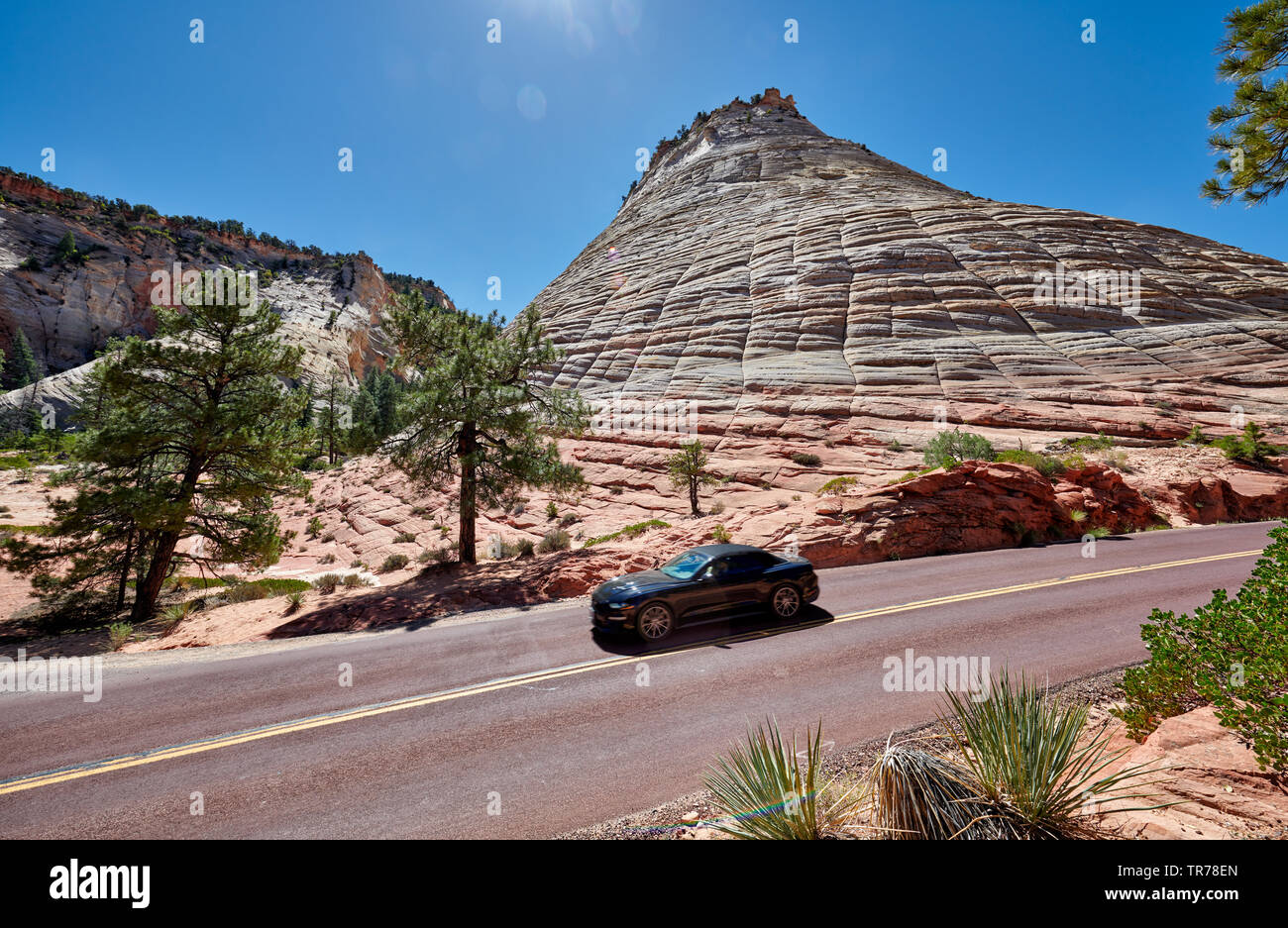 Checkerboard Mesa, Zion National Park, Utah, USA, North America - Stock Image