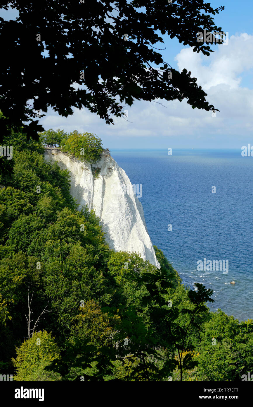 The Konigsstuhl dramatic white chalk cliffs of Jasmund National Park on the German Rugen island, in the Baltic Sea Germany. Stock Photo