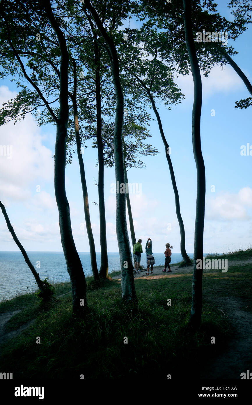 Visitors enjoying beech forest and cliff views of Jasmund National Park on the German island of Rügen, Baltic Sea Germany. Stock Photo