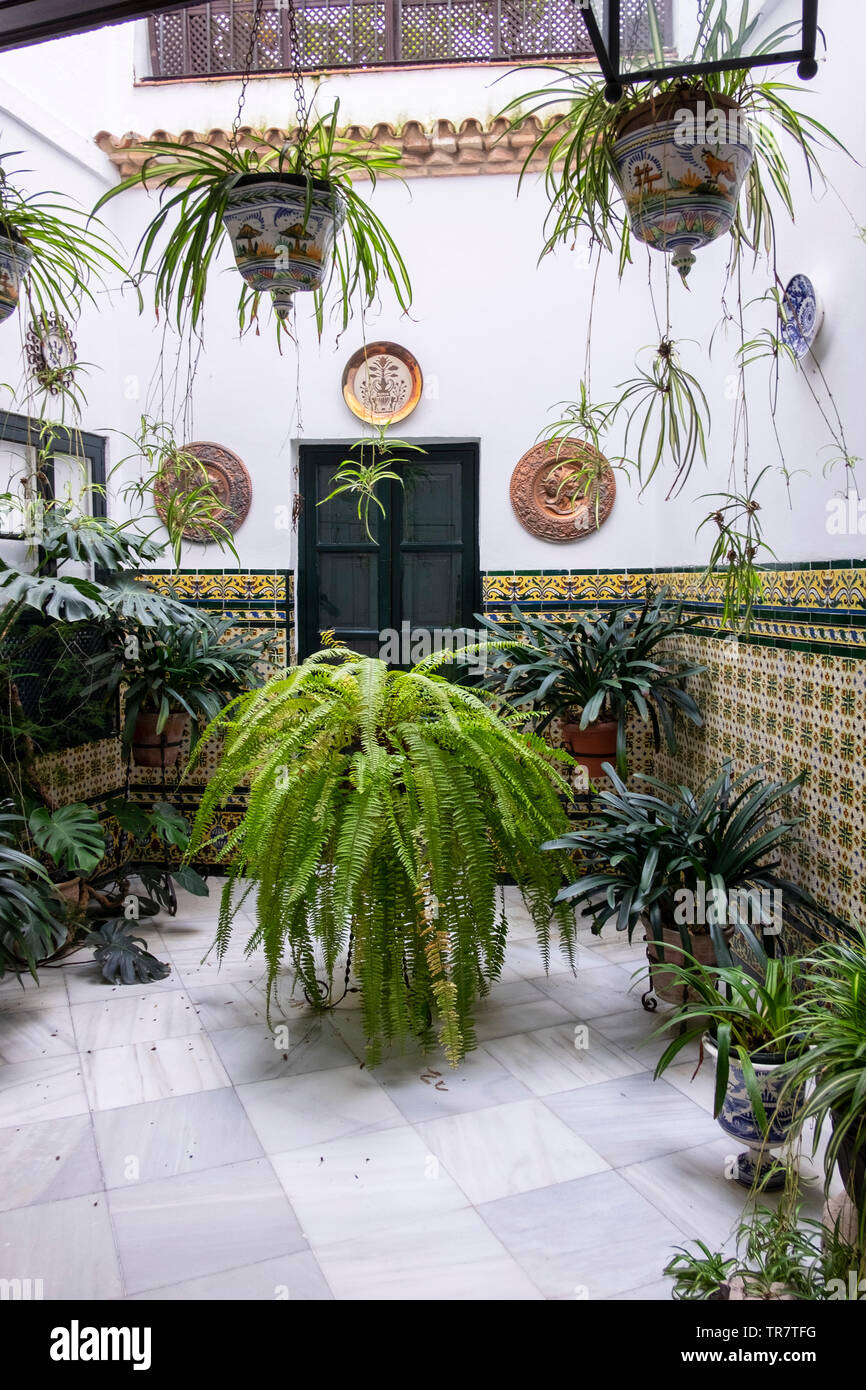 Courtyard filled with house plants in Cordoba, Spain Stock ... on bathroom filled with plants, bedroom filled with plants, house full of plants, house books,